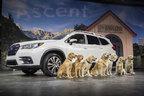 8頭のワンちゃんと登場!スバルの新型SUV「アセント」が世界初公開…価格は333万円から