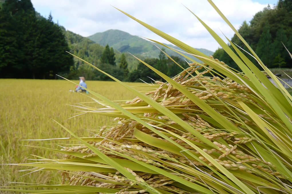 山里のいおり草円