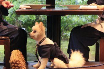 愛犬と海外旅行気分で過ごす、伊豆高原のバリニーズホテル